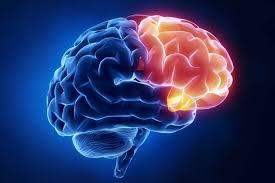 neuropsicologia 2