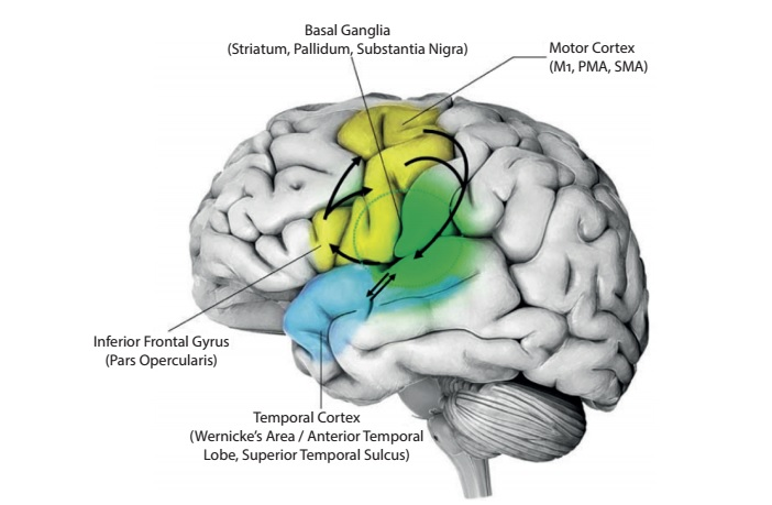 Processes and verbs of doing, in the brain