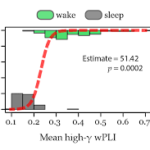 Intracranial highγ connectivity distinguishes wakefulness from sleep