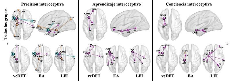 Percibir, aprender y ser consciente de los estados internos dimensiones interoceptivas en modelos de lesión